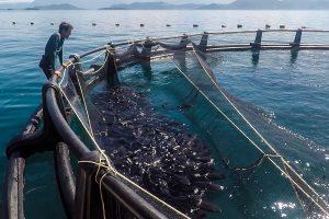 eduardo-sardinha-ipemar-ilha-grande-49