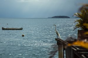 eduardo-sardinha-ipemar-ilha-grande-7359