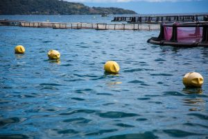 eduardo-sardinha-ipemar-ilha-grande-7503
